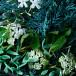 Hand Lotion, Coastal Cypress & Sea Fennel