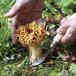 Mushroom Folding Knife